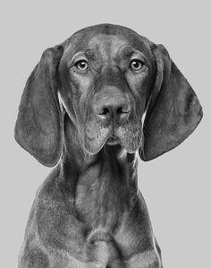 Everything you ever wanted to know about dogs anal glands dogster okc dog grooming dog salon okc dog grooming education school for dog grooming training for dog grooming grooming school oklahoma dog grooming oklahoma solutioingenieria Gallery
