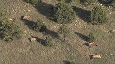 grenz wissenschaft-aktuell: Mysteriöser Tod einer ganzen Elchherde - bis zu 120 Tiere - in New Mexico