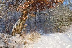 December walk, we do sometimes have snow, Hällesdalen, Stenungsund - Sweden