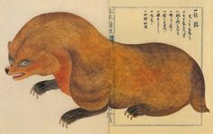 japanese badger - from materia medica