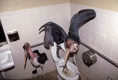 Magill and his team also put some storks in a different bathroom.
