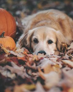 And just like that, the ground is covered in leaves 🍂🍁🎃 Dog Photos, Dog Pictures, Animal Pictures, Animals Of The World, Animals And Pets, Cute Animals, Baby Animals, Pet Dogs, Dog Cat