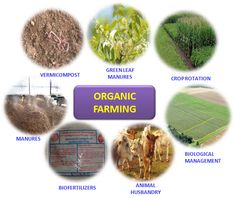 ORGANIC FARMING :: Basic Steps of Organic Farming