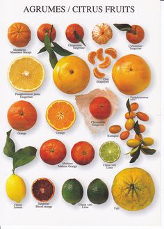 Citrus Fruits, yum!
