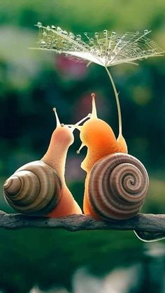 Cute little snails under an umbrella Vedi,già c'è il sole. nature and animals Funny And Cute Pug Videos Compilation 2016 – Funny Dog Videos 2016 🌷Chelle🌷 Beauty in the Nature Cute Creatures, Beautiful Creatures, Animals Beautiful, Cute Funny Animals, Cute Baby Animals, Nature Animals, Animals And Pets, Happy Animals, Animal Photography