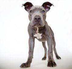 Sharon Montrose - Commercial Animal Photographer, Dog Pictures, Dog Photographer, Pet Photography: Beautiful Buddha