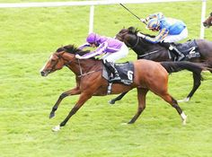 Minding (foaled 10 February 2013) is an Irish Thoroughbred racehorse. She was among the leading two-year-old fillies of her generation in Europe in 2015 when she won three of her five races including the Moyglare Stud Stakes in Ireland and the Fillies' Mile in England. On her first appearance of 2016 the filly posted a decisive victory in the classic 1000 Guineas but was subsequently beaten when favourite for the Irish 1,000 Guineas. She went on to win a second classic in the Epsom Oaks in…