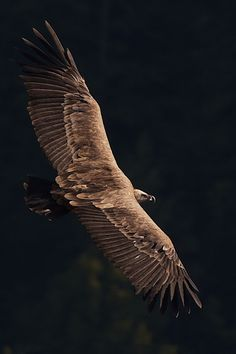 ♂ Wild life photography #animal #birds #eagle fly
