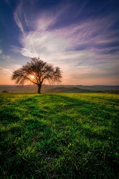 Spring - A green field not far away from Vienna. Fantastic Art, Awesome, All Nature, Green Fields, Landscape Wallpaper, Tree Forest, Far Away, Cool Photos, Amazing Photos