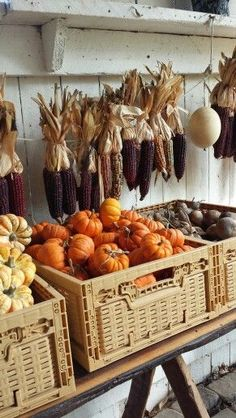 A sure sign of Fall, Indian corn and pumpkins. Harvest Time, Fall Harvest, Harvest Season, Pumpkin Farm, Autumn Aesthetic, Happy Fall Y'all, Fall Pictures, Autumn Inspiration, Autumn Leaves