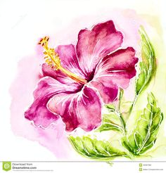 painting hibiscus flowers - Google Search