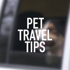 Helpful Tips for Traveling With Pets