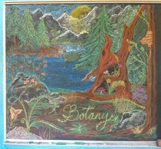 Waldorf ~ 5th grade ~ Botany ~ Title Page ~ chalkboard drawing
