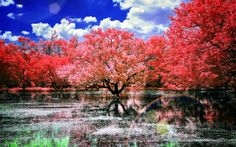 Japan-Cherry-Trees-Wallpaper.jpg