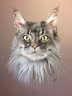 Maine coon ralis in pastel Art Pastel, Pastel Drawing, Cat Drawing, Pastel Portraits, Dog Portraits, Animal Paintings, Animal Drawings, Frida Art, Image Chat