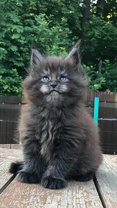 Cute Cats And Kittens, Baby Cats, Cool Cats, Kittens Cutest, Pretty Cats, Beautiful Cats, Animals Beautiful, Cute Funny Animals, Cute Baby Animals
