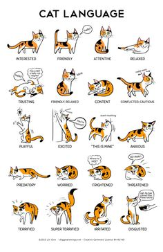 "thecatart:  Cat Language 11"" x 17"" Print cat pictures art  beili"