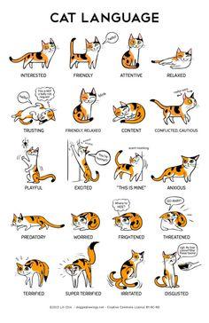 "thecatart:  Cat Language 11"" x 17"" Print cat pictures art  beili"