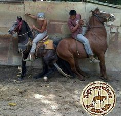 Bad Horsemanship Cute Animal Pictures, Animal Pics, Animal Rescue Stories, Broken Spirit, Post Animal, All About Horses, Stop Animal Cruelty, Create Awareness, Beautiful Horses