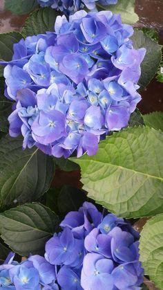 Azul da cor do céu ❤