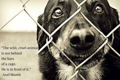 animal quotes - Google Search