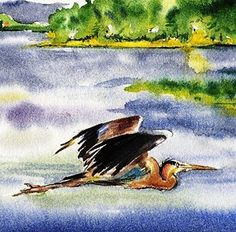 Great Blue Heron Watercolor Bird art print Cottage Decor by Barry Singer a great gift for the Nature Lover lake House painting. With a wingspan up to 79 inches, the Great Blue Heron (Ardea herodias) is a large wading bird in the family Ardeidae, common near the shores of open water and in wetlands over most of North America.. Final size is 8X10. Has a white border so matting is optional. Image size is 5.5 X 7.5 inches. This print from an original watercolor by Barry Singer is ready to pop...