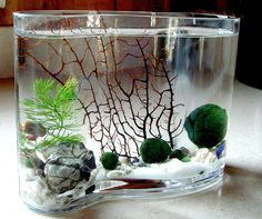 Zen Big Wave Marimo Ball Unique Mini Aquarium/Terrarium by MyZen on Etsy https://www.etsy.com/listing/162393262/zen-big-wave-marimo-ball-unique-mini