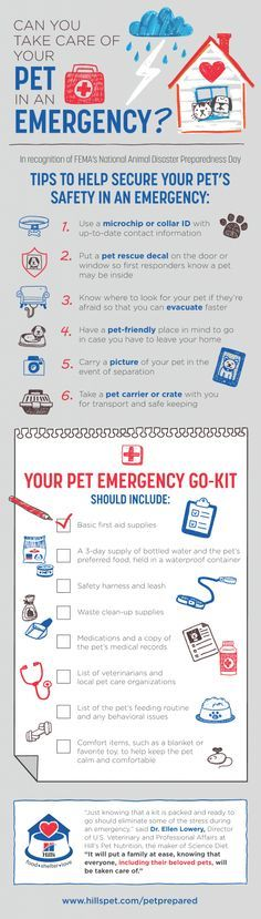 Can I Feed My Cat Dog Food In An Emergency
