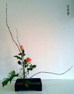 Blog - Ikebanaka Sanguepa - Λευκώματα Iστού Picasa