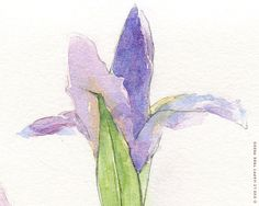 Purple Iris: Watercolor Print (8x10)