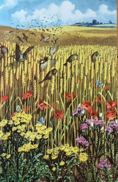 Sparrows in a corn field, illustration by C. Tunicliffe for the Ladybird book 'What to look for in summer', 1960 British Wildlife, Wildlife Art, Nostalgic Images, Nature Artists, Ladybird Books, Children's Book Illustration, Book Illustrations, Bird Art, Landscape Art
