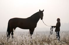 Vogue Horse