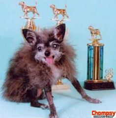 These are photos of the winners of the various contest for The Ugliest Dog in the World. Competition is tough because there are some really ugly (but funny) dogs World Ugliest Dog, Ugliest Dog Contest, Ugly Dogs, Spirit Animal, Being Ugly, Cute Dogs, Funny Pictures, Fox, Animals