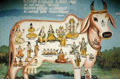 Gomukhasana, la posizione del muso di vacca