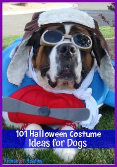 100 Halloween Costume Ideas for Dogs - Fidose of Reality Best Dog Halloween Costumes, Different Halloween Costumes, Small Dog Costumes, Cute Dog Costumes, Animal Costumes, Costume Ideas, Seattle Dog, Funny Animals, Cute Animals