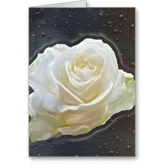 White Rose Floral Cards