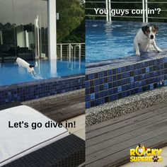 It's Rocky by the pool. Amazing Adventures, Diving, Outdoor Decor, Fun, Scuba Diving, Hilarious