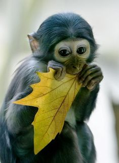 Monkey - photo by Hans Peter (link in description) -