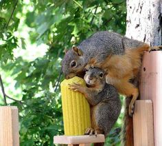 Another pinner wrote: My daughter took this picture of the squirrels that visit the feeder that she built and put up in a tree in her yard. Nature Animals, Woodland Animals, Animals And Pets, Funny Animals, Cute Animals, Wild Animals, Farm Animals, Hamsters, Rodents