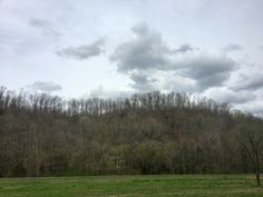 Tennessee trees