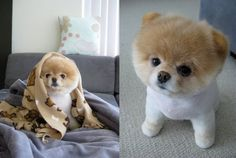 BOO the cutest dog in the world! Description from pinterest.com. I searched for…