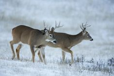 Old-school advice for deer hunters during the off-season. Deer Hunting Tips, Whitetail Hunting, Realtree Camo, Hunting Rifles, Oh Deer, Sunset Photos, Photo Craft, Things To Do, Wildlife