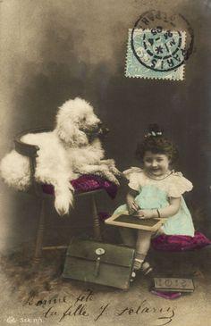 Poodle 1910