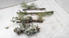 Lichen Branches by MossyLittleShop on Etsy Buy Moss, Branches, Unique Jewelry, Handmade Gifts, Etsy, Vintage, Hand Made Gifts, Craft Gifts, Vintage Comics