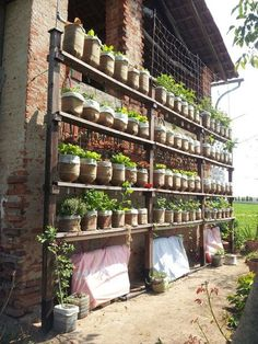 Picture of Self watering vertical garden with recycled water bottles