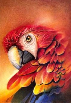 New Bird Painting Parrot Ideas Parrot Drawing, Parrot Painting, Painting & Drawing, Animal Paintings, Animal Drawings, Art Drawings, Watercolor Pencils, Watercolor Paintings, Polychromos
