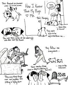 Bah Humpug: How I Know That My Pugs Love Me