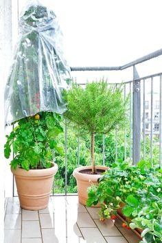Garden, Ideas, Decor, Naturaleza, Gardens, Garten, Decoration, Lawn And Garden, Decorating