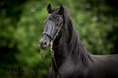 Pferde im Portrait - Julia Moll Pferdefotografie