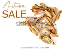Find Autumn Sale Text Dry Leaves Isolated stock images in HD and millions of other royalty-free stock photos, illustrations and vectors in the Shutterstock collection. Thousands of new, high-quality pictures added every day.